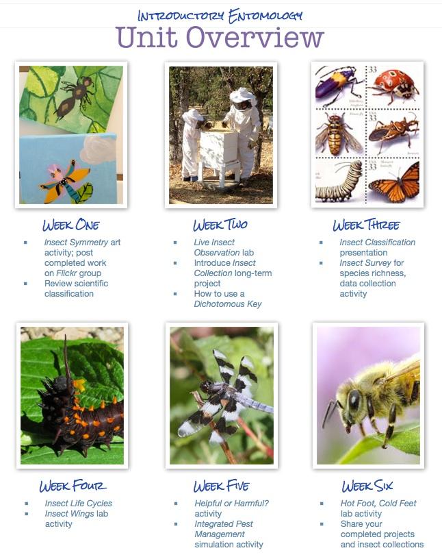 entomology course outline