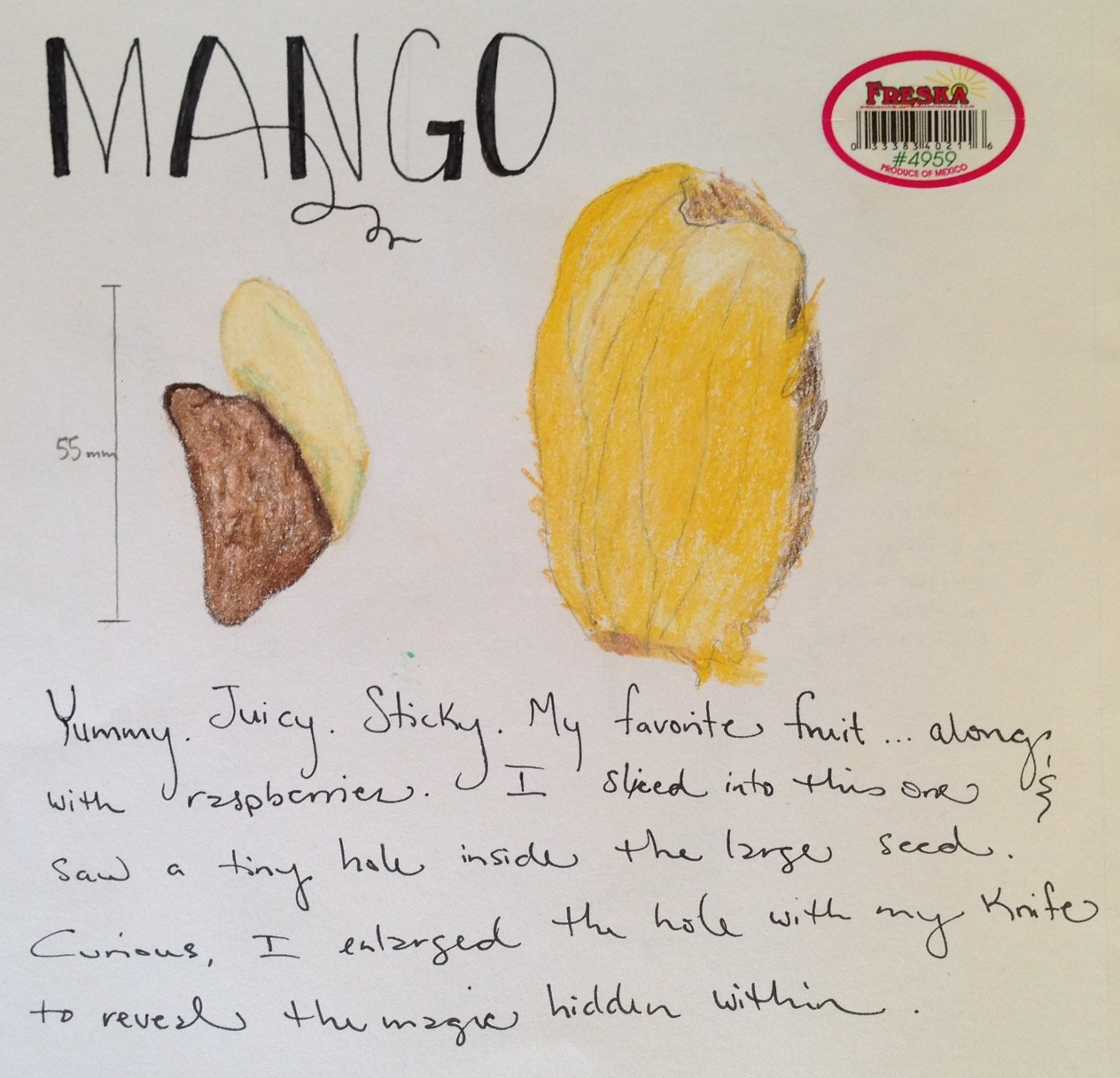Essay on my favorite fruit mango