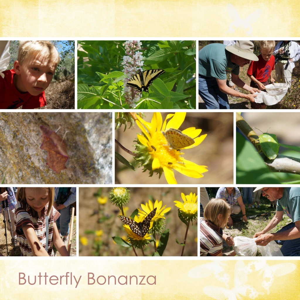 butterfly bonanza