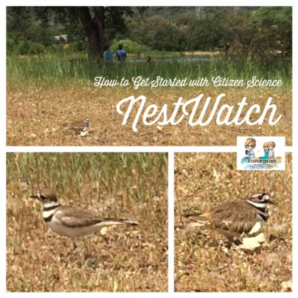 NestWatch: How to Get Started with Citizen Science @EvaVarga.net