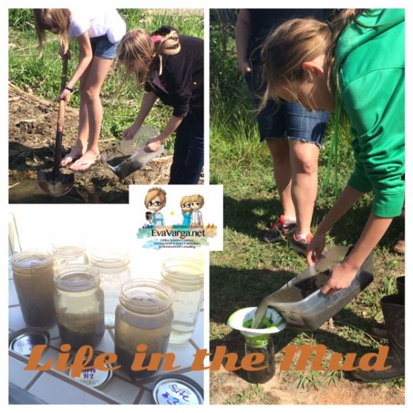 STEM Club: Life in the Mud @EvaVarga.net