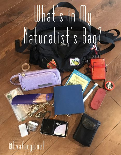Image of a naturalist's bag with contents displayed around it.