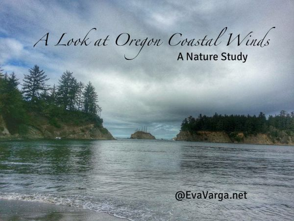 Oregon Coastal Winds: A Nature Study @EvaVarga.net