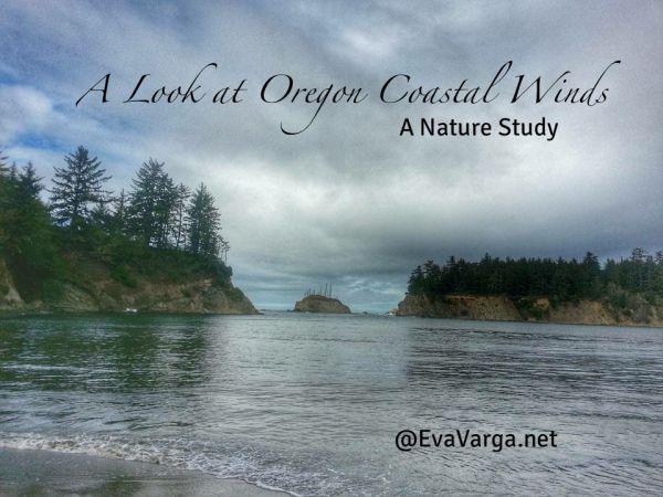 Oregon Coastal Winds: A Nature Study @EvaVarga.net