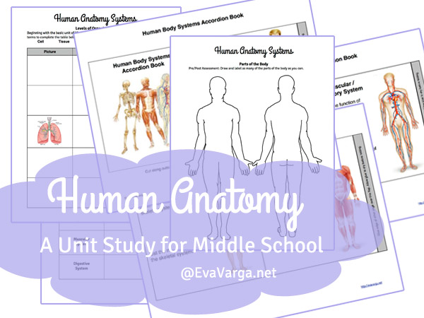 anatomyprintables