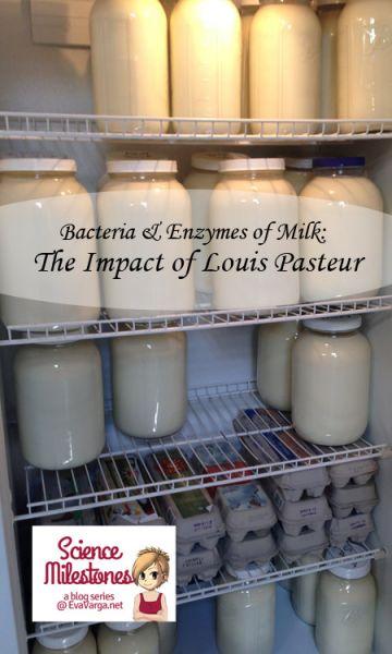 Bacteria & Enzymes of Milk: The Impact of Louis Pasteur @EvaVarga.net