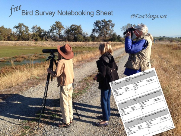 bird survey notebooking page