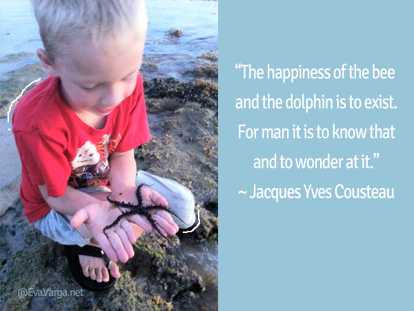 cousteau quote