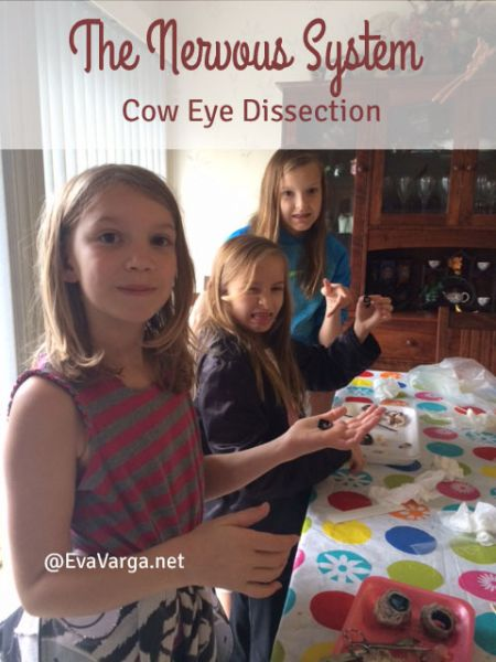 coweyedissection