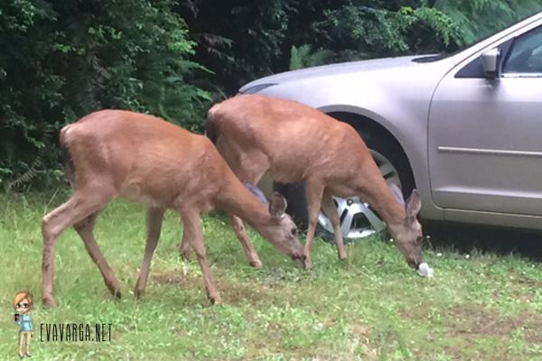deer populations