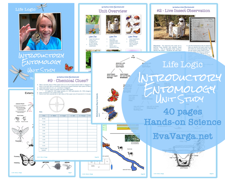 Introductory Entomology (Insects) Unit Study