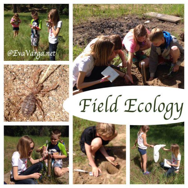 field ecology