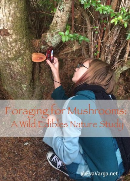 Foraging for Mushrooms: A Wild Edibles Nature Study @EvaVarga.net
