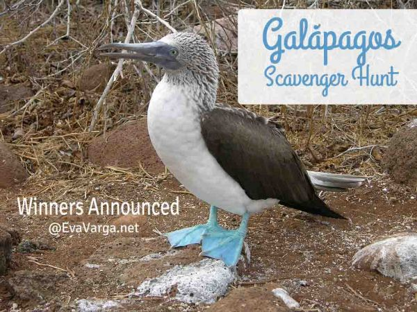 galapagos_winners