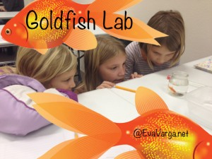 goldfish lab