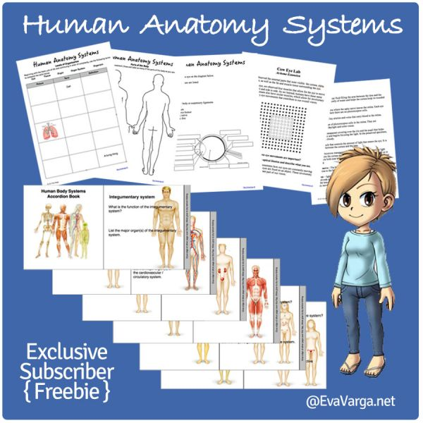 Stem Club Introduction To Body Systems Eva Varga