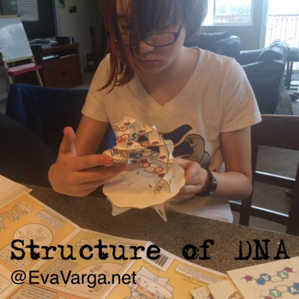 The Structure of DNA @EvaVarga.net