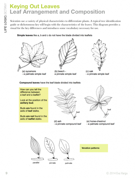 how to make a dichotomous key for plants