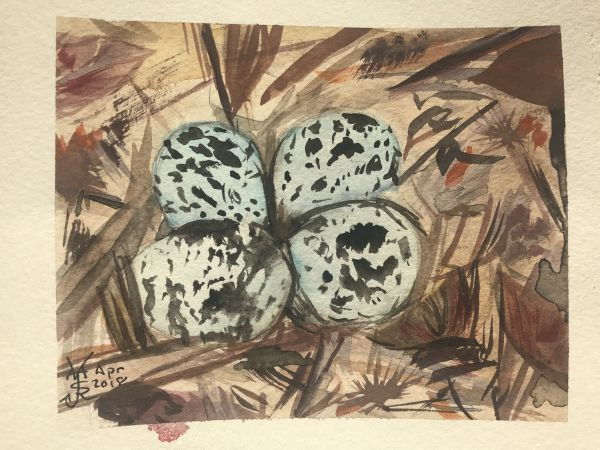 watercolor image of kildeer eggs in nest