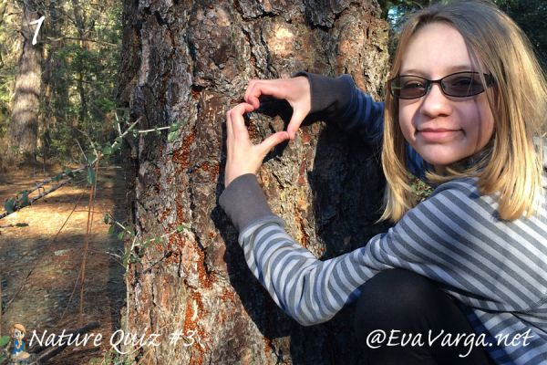 image of a girl with her hands in the shape of a heart around the base of a tree covered with ladybugs with text: Nature Quiz #3 @EvaVarga.net
