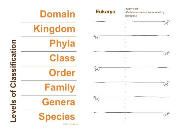 STEM Club Scientific Classification and Dichotomous Keys Eva Varga – Classification Worksheet Biology