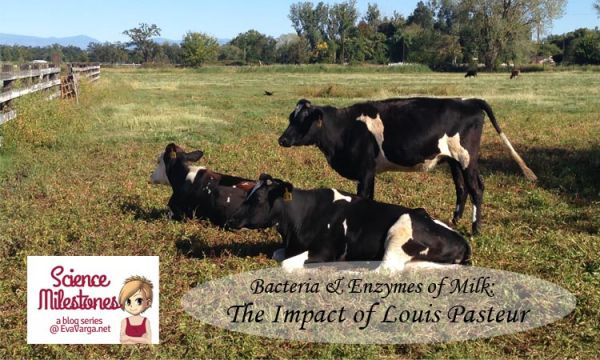 Bacteria & Enzymes of Milk: The Impact of Louis Pasteur @EvaVarga.net