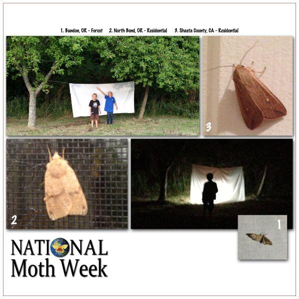 moth week