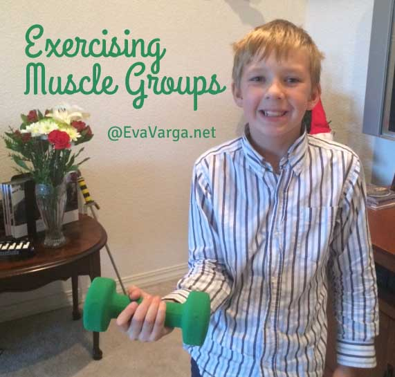 musclegroups