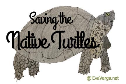 native turtles