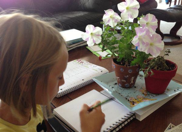 petunia nature study