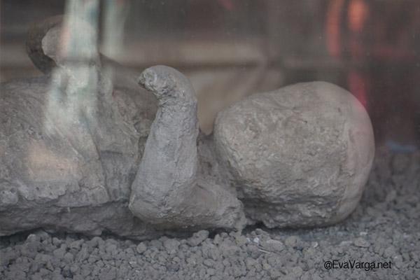 pompeii tragedy