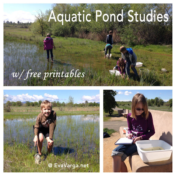 pond studies
