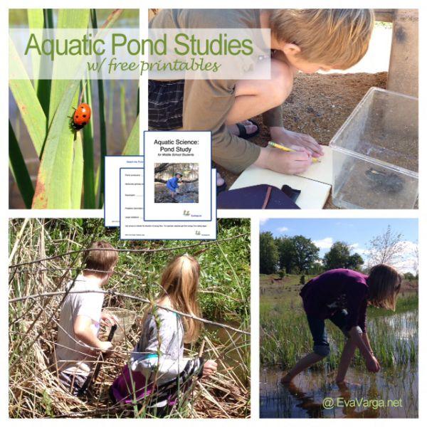 pond study printables