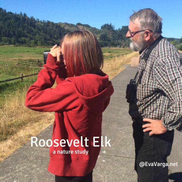 Roosevelt Elk: A Nature Study @EvaVarga.net