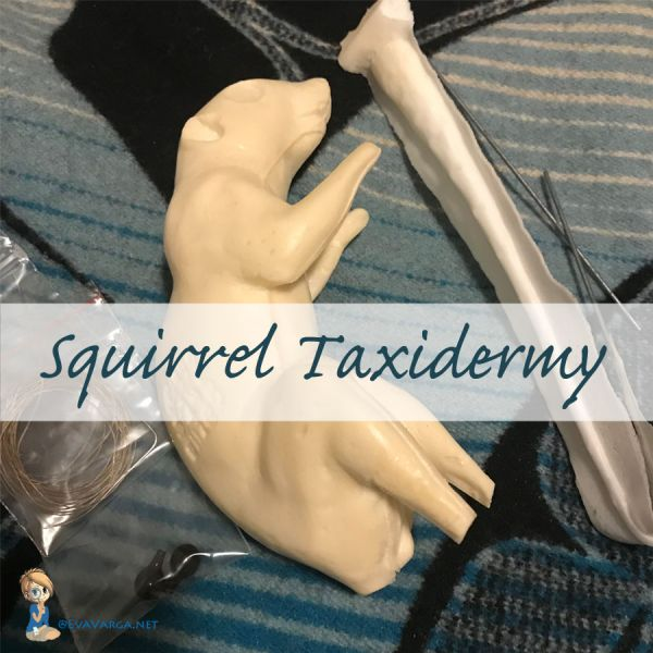 small mammal or squirrel taxidermy kit supplies