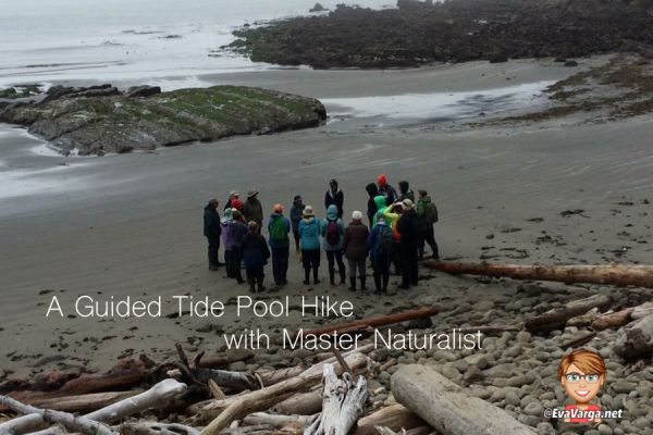 Image of a group of people on a beach with tidepools in the background. Text overlay reads A Guided Tide Pool Hike with a Master Naturalist @EvaVarga.net