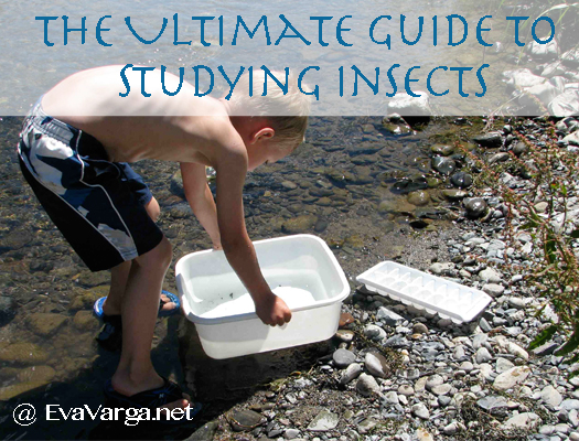 ultimate guide insects