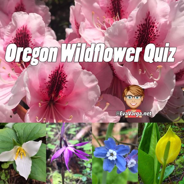 Image collage of wildflowers in Oregon