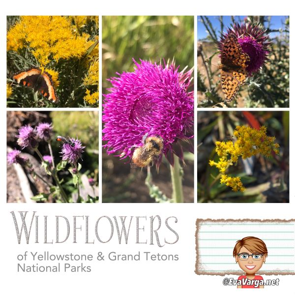 photo collage of wildflowers and pollinators with text overlay