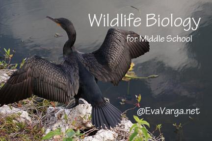 wildlifebiology