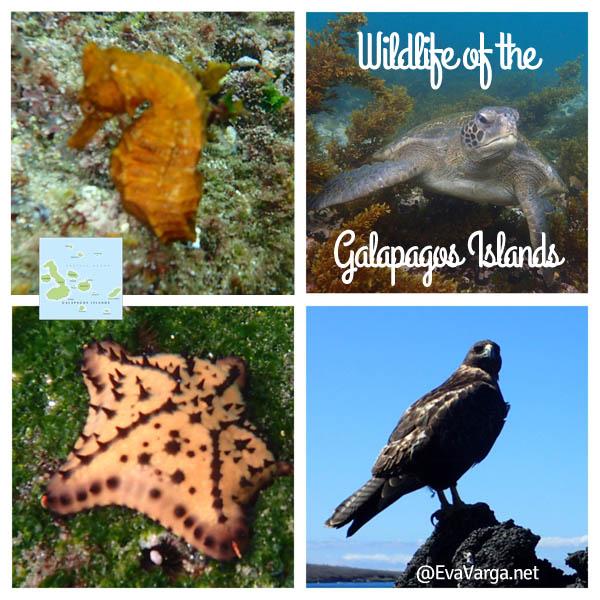 wildlifegalapagos